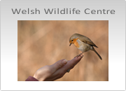 Welsh Wildlife Centre Photography Workshop