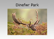 Dinefwr Park Photography Workshop