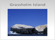 Grassholm Island Photography Workshop