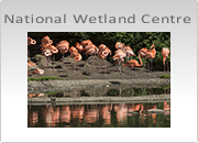 WWT National Wetland Centre