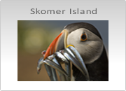 Skomer Island Photography Workshops