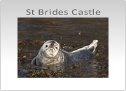 St. Brides Castle