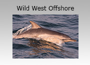 Wild West Offshore Adventure